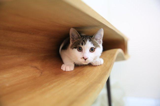koci-stół-2